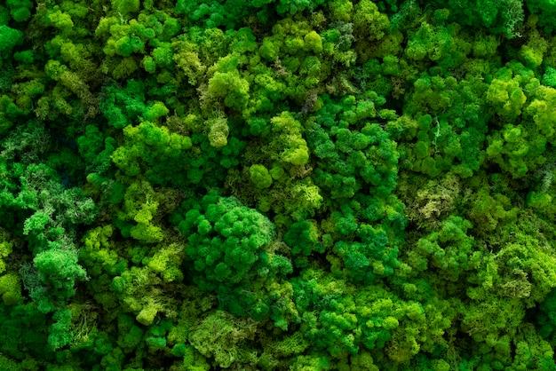 森の苔。緑の木々のトップビュー。