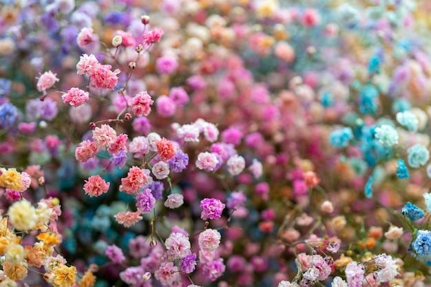 色とりどりの小さな美しい装飾花。