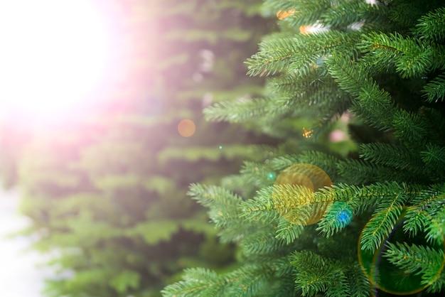 緑のトウヒ、クリスマスツリー。デフォーカス。バックグラウンド