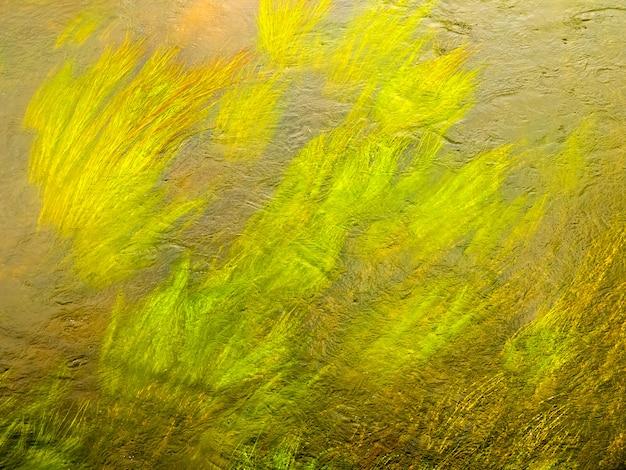 川の澄んだ水の中の藻の緑の茎。