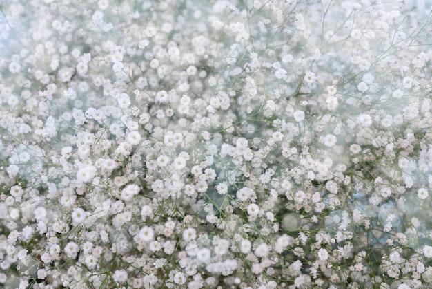 小さな白い花。