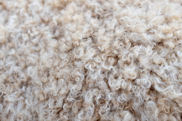 子羊のカーリーコート。