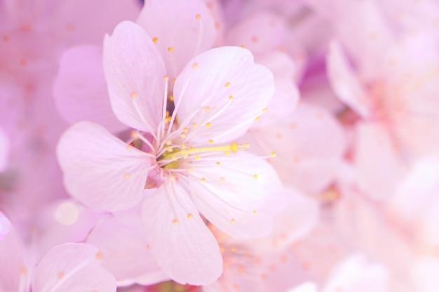 結婚式で春の庭に咲く桜の枝。