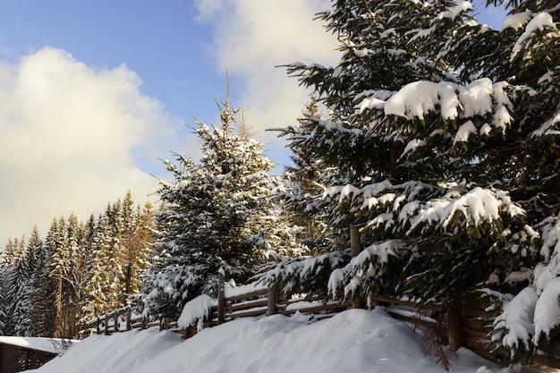 Спокойной зимой живописный вид елей, покрытых снегом в горах