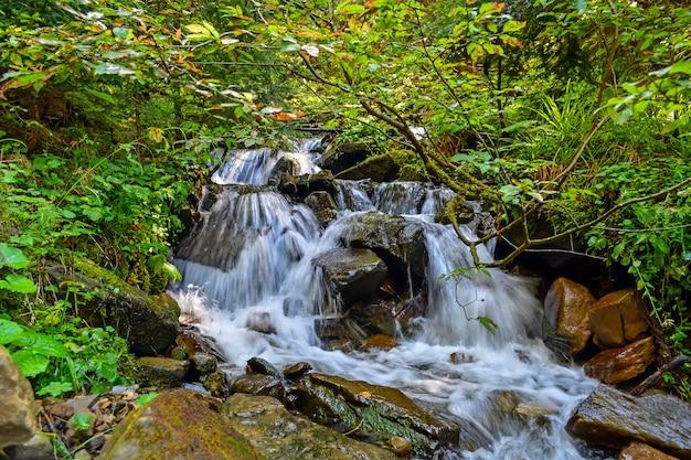 森林の小さな滝