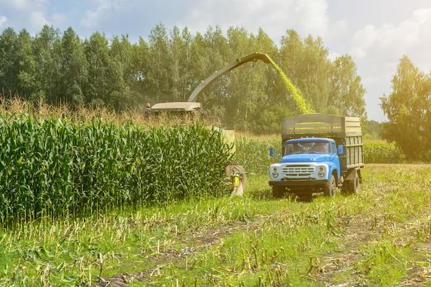 コンバインハーベスターによるジューシーなトウモロコシサイレージの収穫とトラック輸送