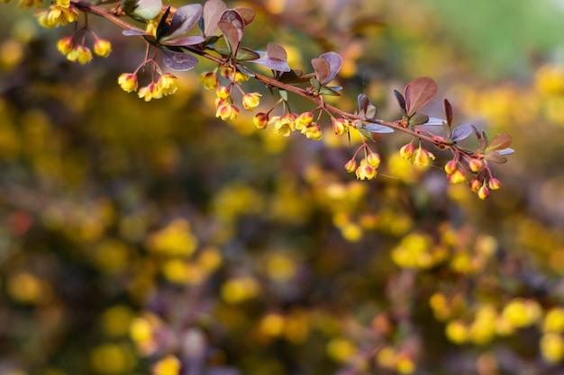 黄色の花とメギの赤い葉。
