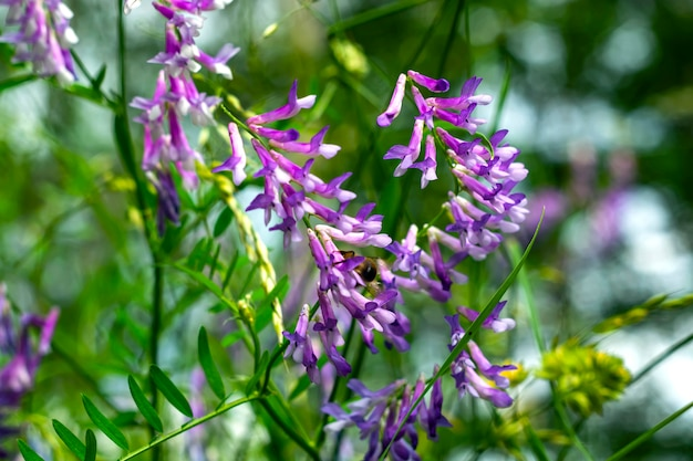 深い青色の空を背景に花粉を集めるミツバチと野生の黄色い花。