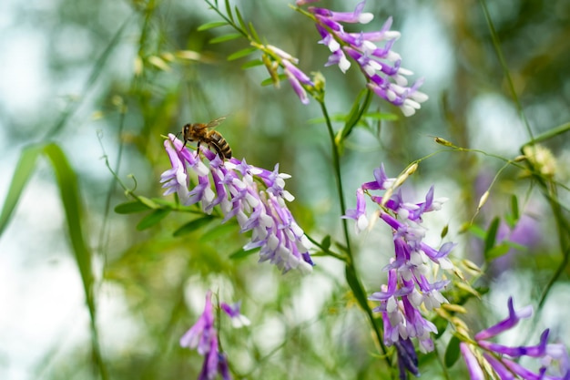 Дикие желтые цветы с пчелой, собирая пыльцу против глубокого синего неба.