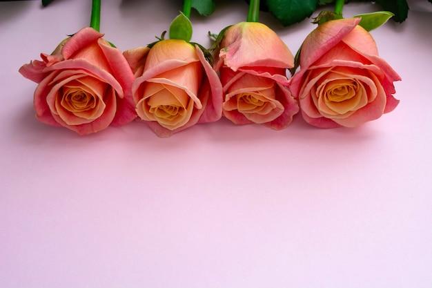 ピンクの背景の新鮮で繊細なバラ