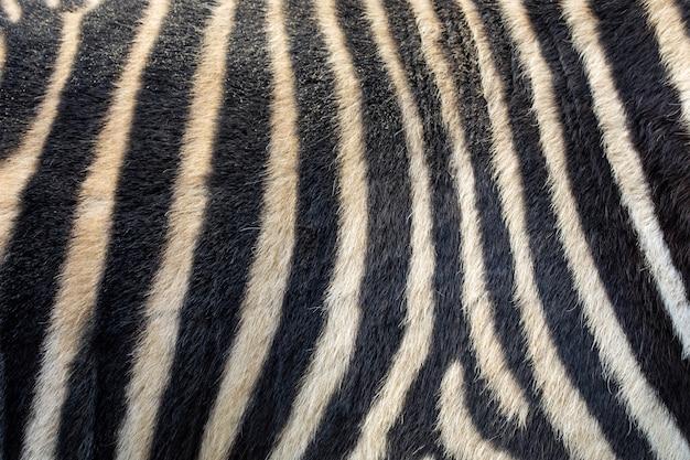 Полосатый, черно-белый фон кожи зебры
