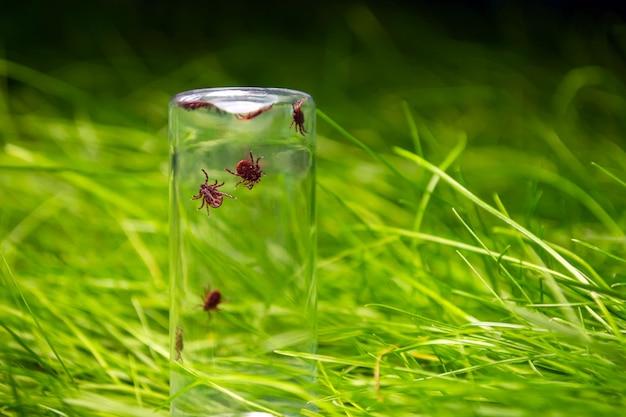草の背景にガラス瓶の中のダニ