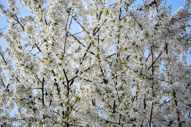 空を背景に開花木の枝