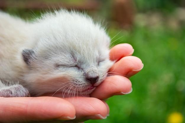 手のひらに小さな生まれたばかりの盲目の子猫