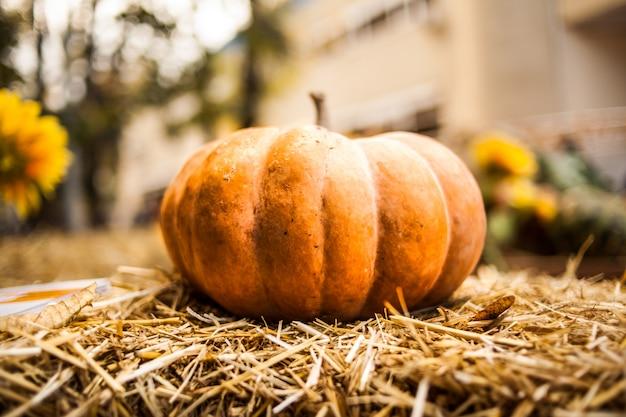 Оранжевая тыква в сене. осень. урожай.
