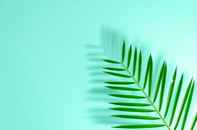 ハードシャドウとヤシの木のクローズアップの平らに置かれた緑の葉。
