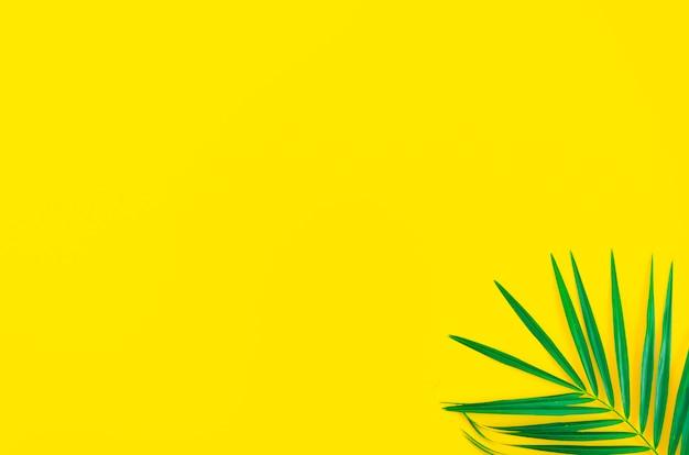 黄色の背景に熱帯の葉のヤシの木。トップビューチラシ