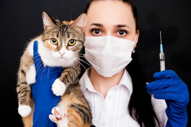 獣医師は猫を手に持っています。猫の予防接種。猫の治療。医師との相談。
