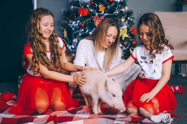 Мама с двумя дочерьми играет с мини-свиньей возле новогодней елки