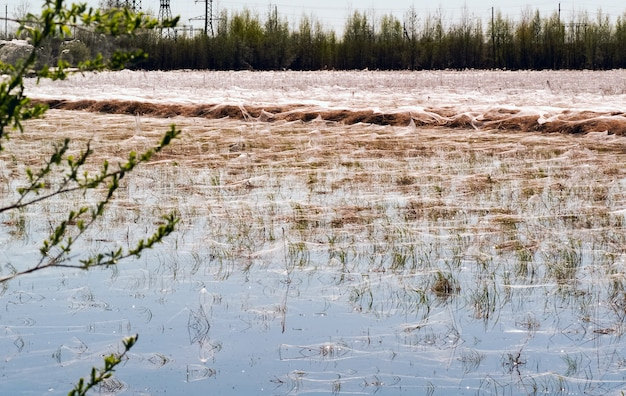 Пауки и паутины в сухой траве возле пруда. сибирь. россия.