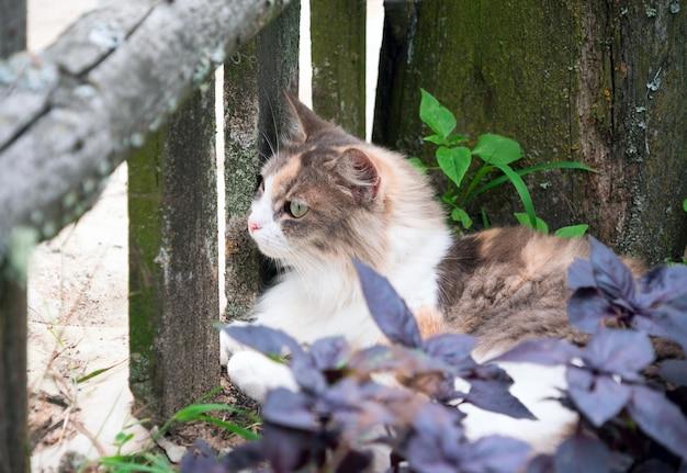 明るい赤猫が村の芝生の上にあります。