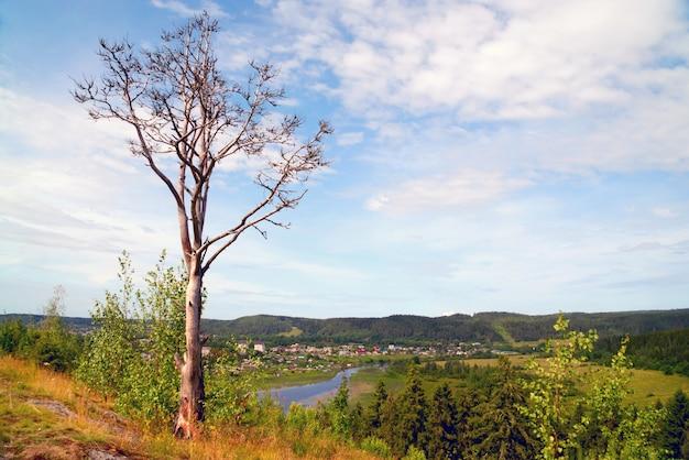 山の村の端に枯れ木