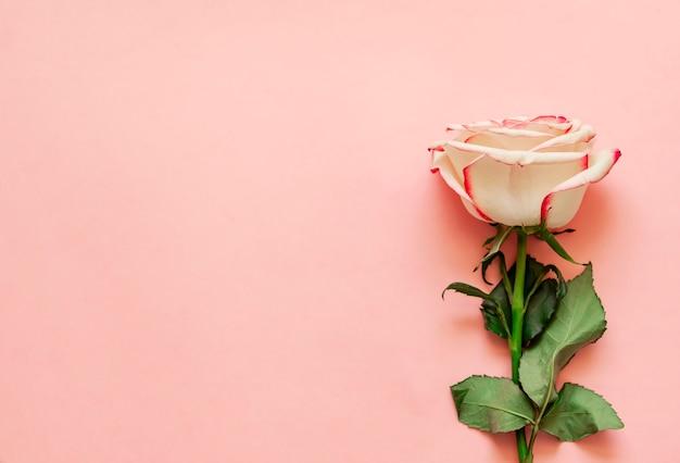 テキストのための場所でピンクの背景に単一のバラの花