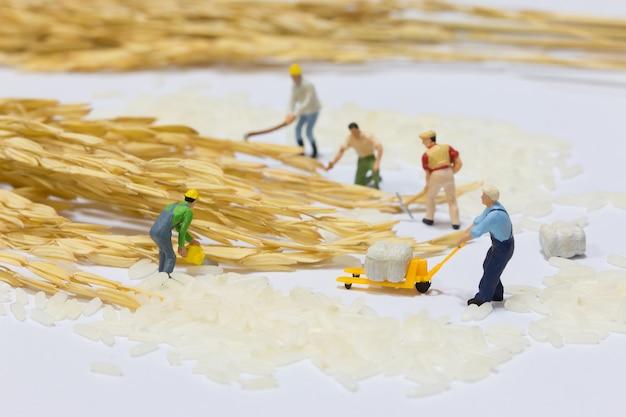 ミニチュアのグループが米を収穫します。ビジネスチームワークの概念。