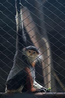 ケージに座っているサル。タイの全国動物園。