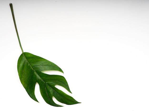 熱帯のヤシの葉春