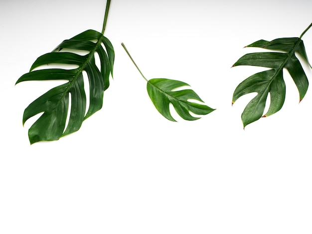 Тропические пальмовые листья весной