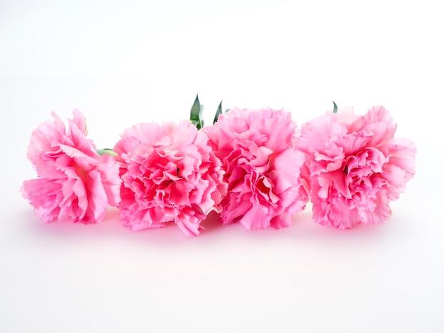 Розовый цветок гвоздики на день матери