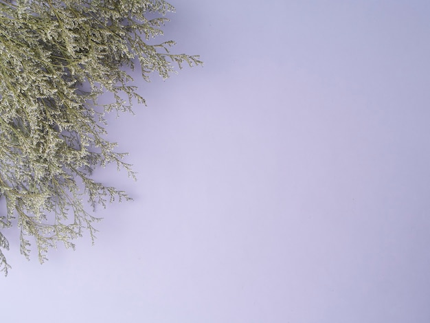 Маленькие фиолетовые лимониум сухие цветы, изолированные на фиолетовом фоне