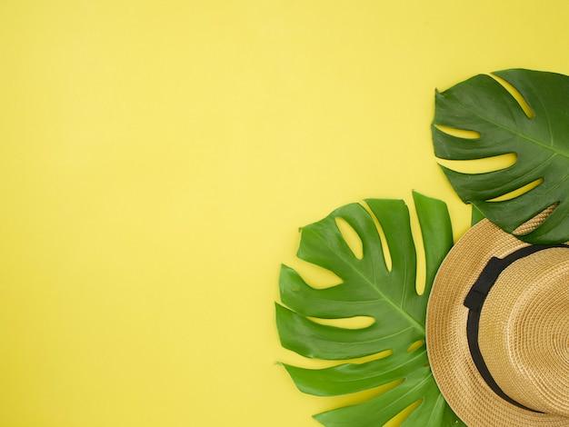 モンステラの葉、帽子