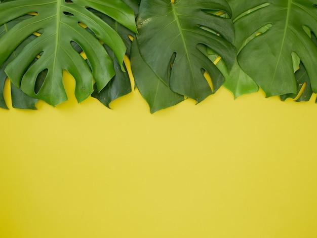 黄色の背景に緑の熱帯モンステラ製のフレームを残します。