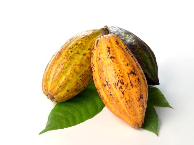 緑の葉と新鮮なココアフルーツ
