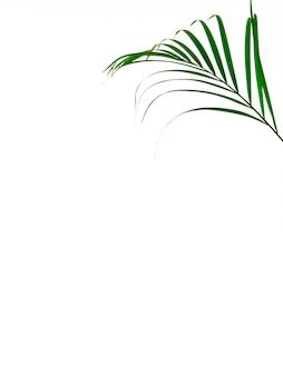 白い背景の上の熱帯のヤシの葉