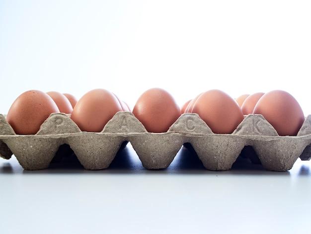 鶏卵の分離