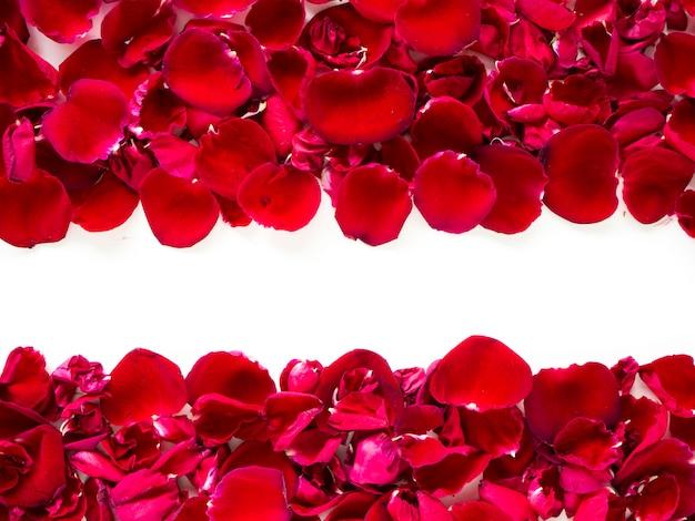白い背景にロマンチックな赤いバラの花びら