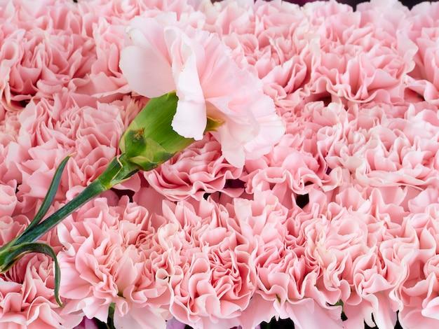 ピンクのカーネーションで作られたフレームの花