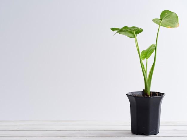 白い木製の棚の上の植木鉢。