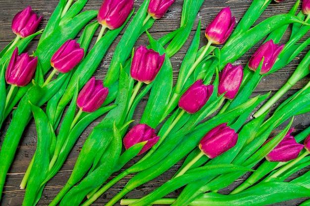 黒の背景に花の濃いピンクのチューリップ。