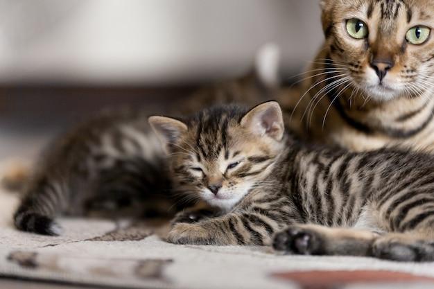 床に横たわって、縞模様の赤ちゃん子猫と美しいベンガル猫の肖像画