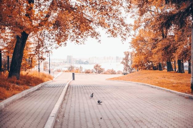 オレンジの木と美しい秋の風景。公園の紅葉。自然の落ち葉