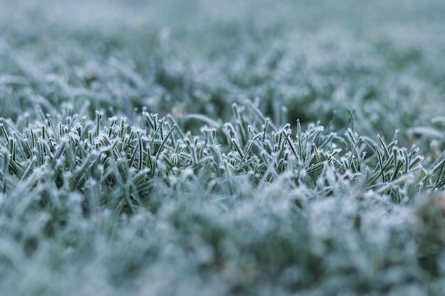 初冬の緑の芝生の上の朝の霜