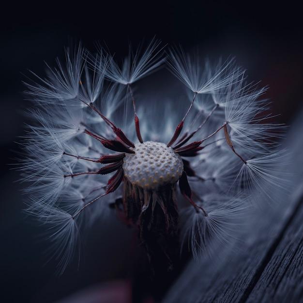 春のタンポポの花植物