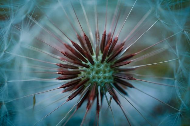 春のタンポポの花のテクスチャ