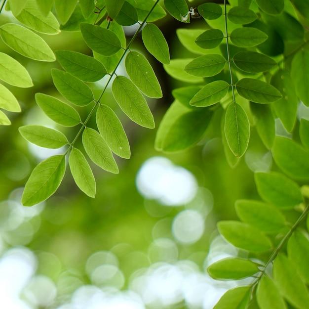 緑の木の葉と夏の自然の中で枝