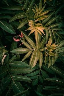 Зеленые и красочные листья растений текстурированные в саду летом
