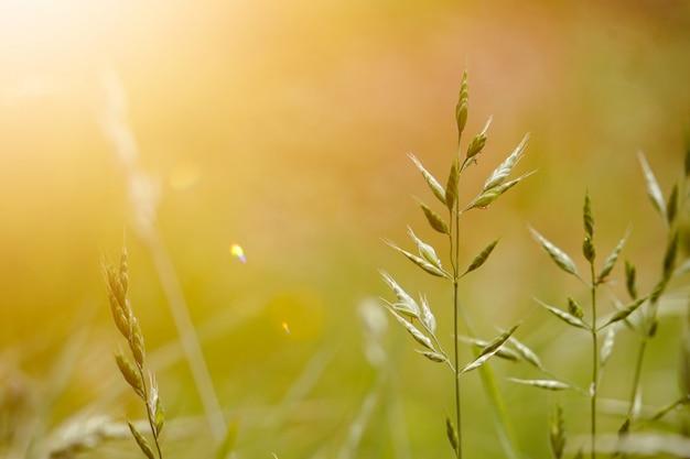 秋、緑の背景の自然の中で緑の植物
